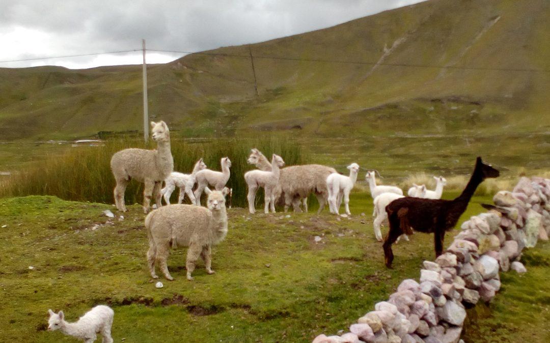 Programa en Manejo Holistico® para la regeneración de pastos naturales. Cusco, 8-12 Julio 2019